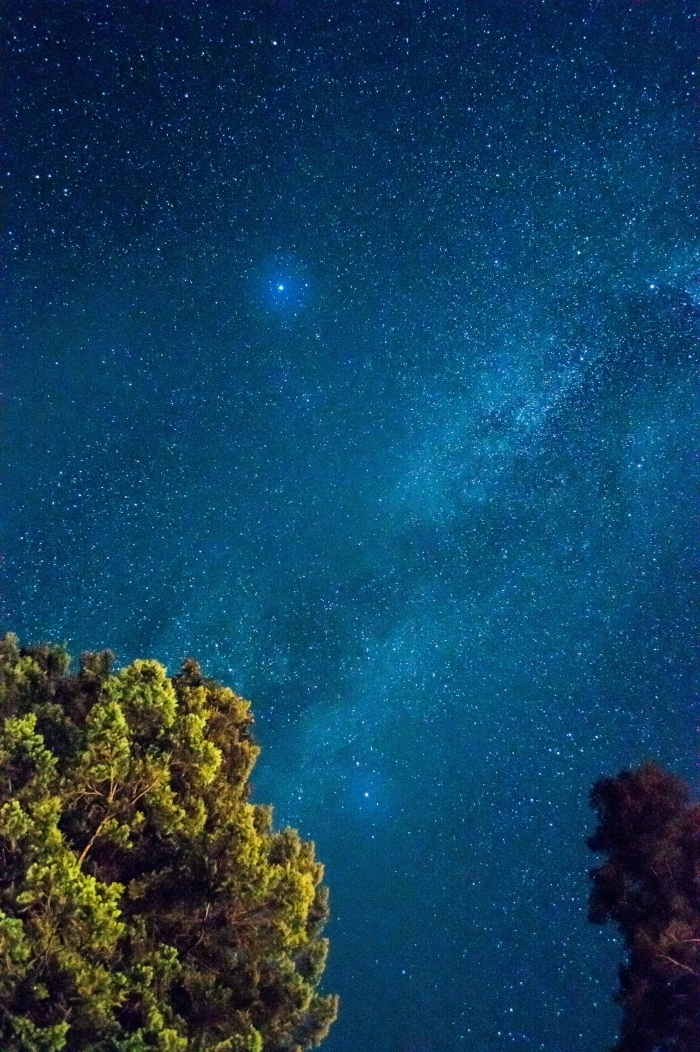 beau fond d écran pour votre smartphone, image de ciel nocturne parsemé d'étoiles et couronnes des arbres vertes