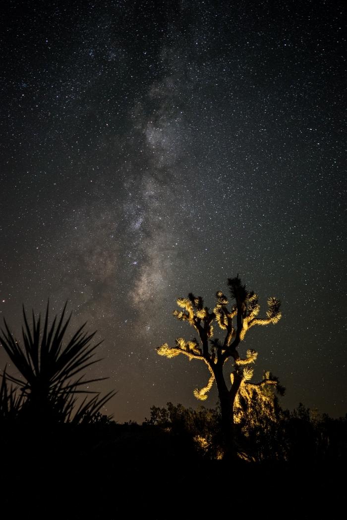 photo fond d écran originale pour customiser son écran de verrouillage, image silhouettes de plantes sous ciel étoilé