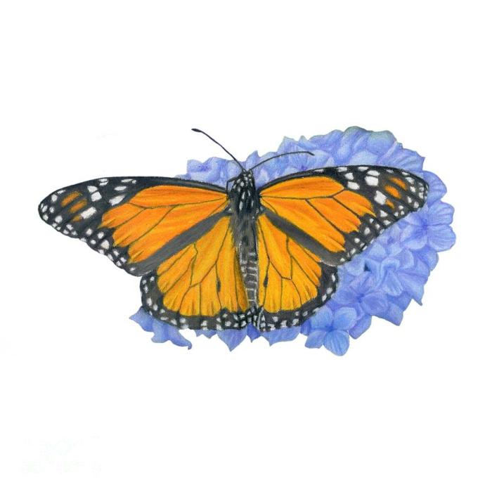 Hortensia bleu et papillon monarch image papillon, comment dessiner un papillon facile retracer