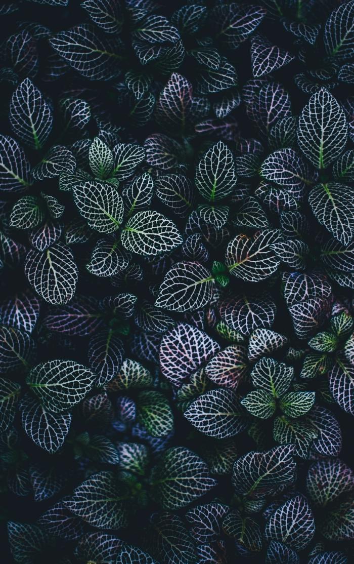 Feuilles vertes fond d'écran beau, bohème déco fond d'écran cocooning nature