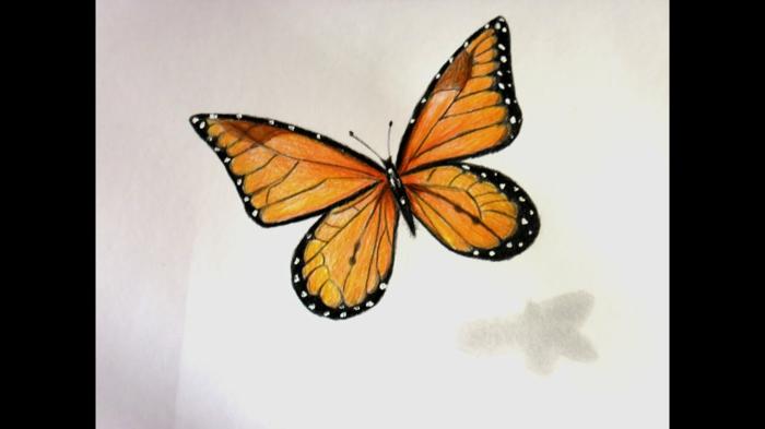 Papillon orange coloré, image d'un beau papillon a dessiner simplement et colorier