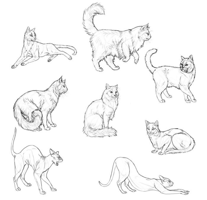 exemples de dessin de chat au crayon, idées comment faire un dessin d'animal de compagnie ou animal sauvage