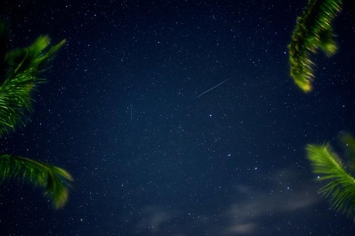 image fond d écran originale pour ordinateur, photo de ciel nocturne parsemé d'étoiles et silhouettes de palmiers