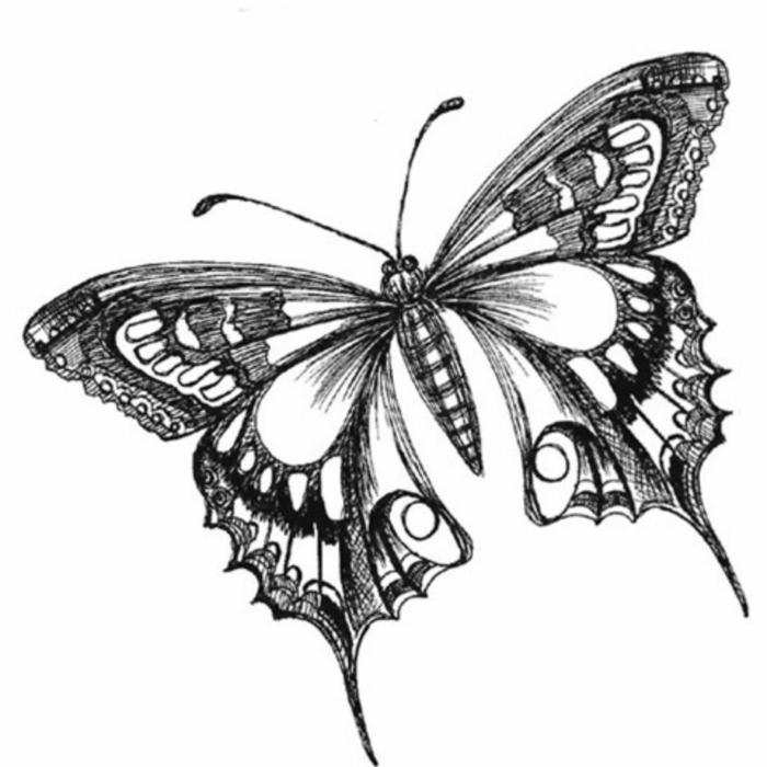 Crayon dessin motif joli dessin facile a reproduire par etape, comment dessiner un papillon