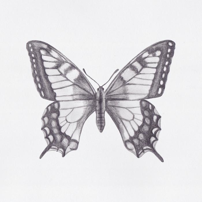 Bien dessiner un papillon en crayon noir, dessin de papillon magnifique, dessin facile a reproduire par etape