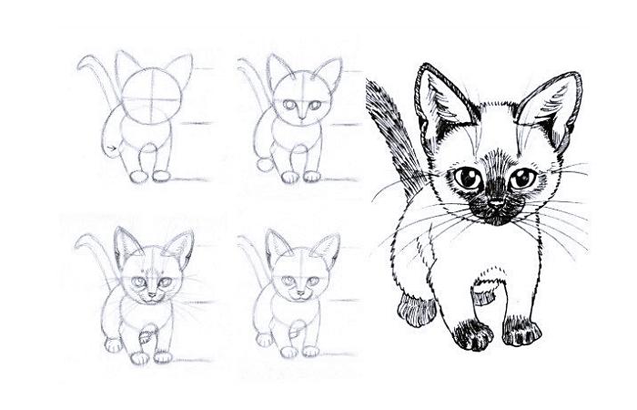 étapes à suivre pour faire un corps avec patte de chat dessin, tutoriel facile pour un dessin au crayon de petit chat