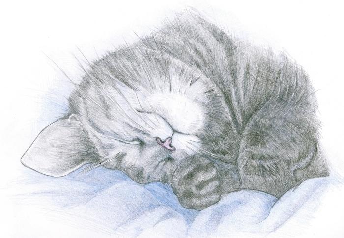magnifique dessin de chat mignon facile au crayon, apprendre à réaliser des dessins au crayon à motifs animaux