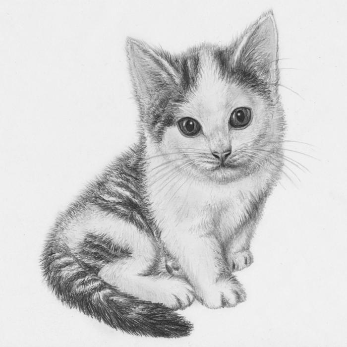 apprendre comment dessiner un chat au crayon, modèle de dessin blanc et noir d'un petit animal de compagnie mignon