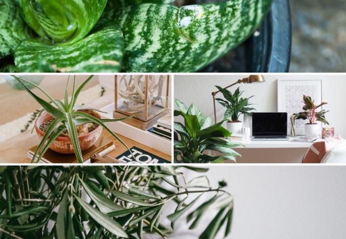 quelle plante d'intérieur choisir pour son coin de travail, idées de choix de plantes pour purifier l'air dans son bureau