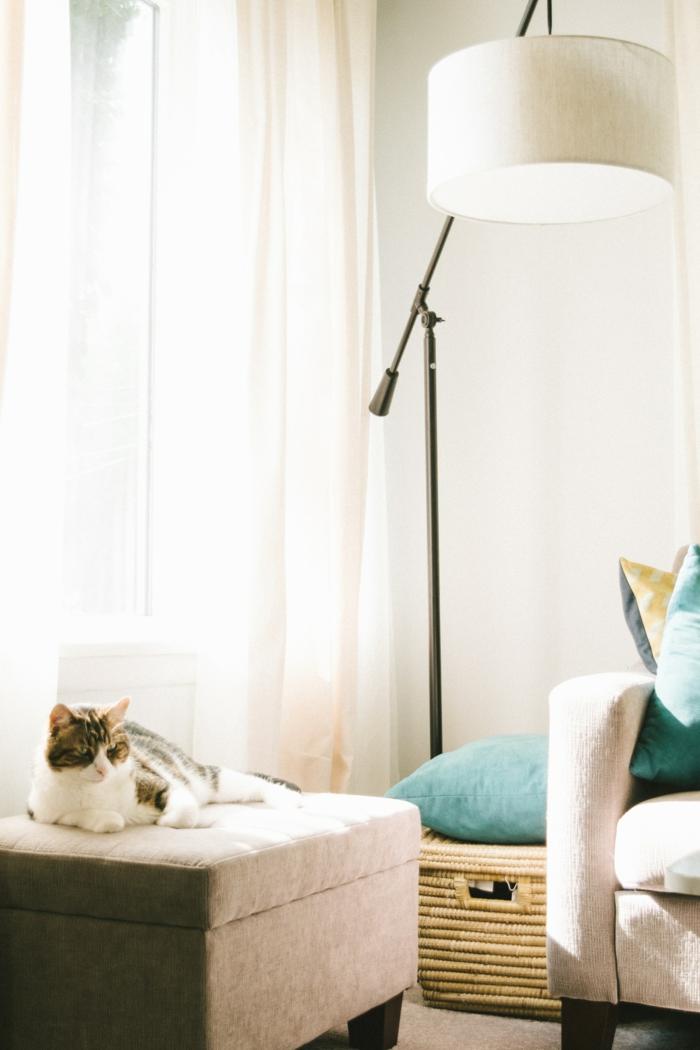 Chat fond d'ecran zen, beau fond d'ecran, se sentir bien a la maison salon canapé gris
