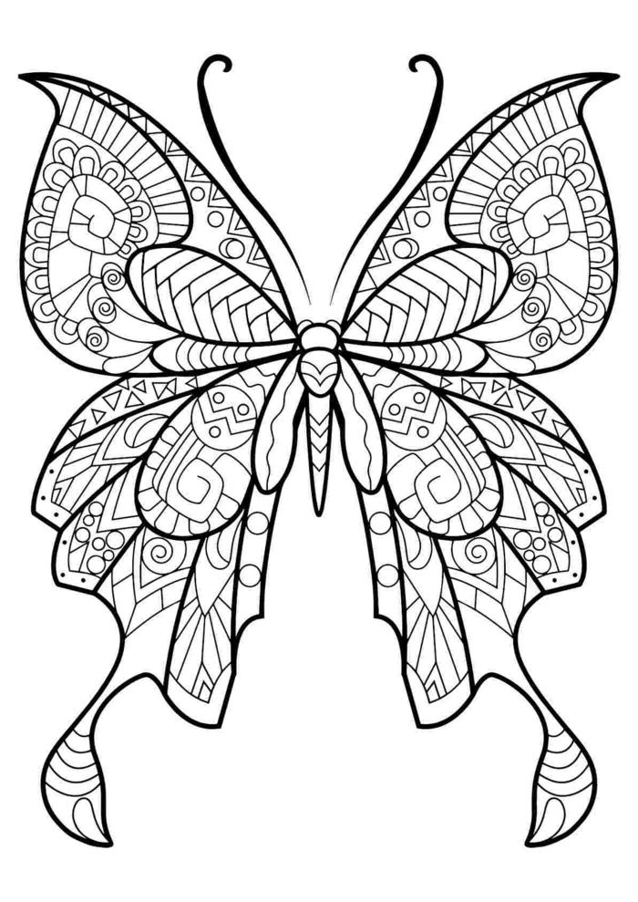 Dessin a colorier comment dessiner un papillon, simple dessin animal