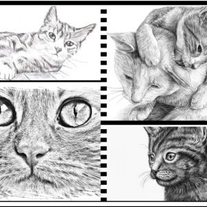 Comment dessiner un chat : tutoriels et idées pour débutants et pros