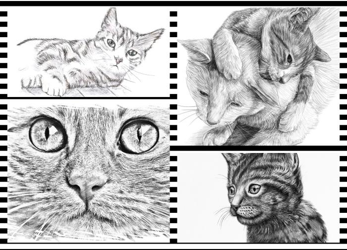 apprendre à réaliser un dessin chat facile, modèles de dessin mignon au crayon pour débutants et pros