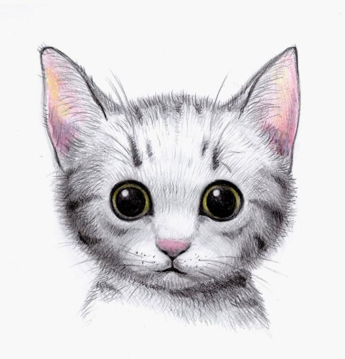 idée de dessin de chat facile a reproduire au crayon, modèle de dessin petit animal de compagnie au crayon