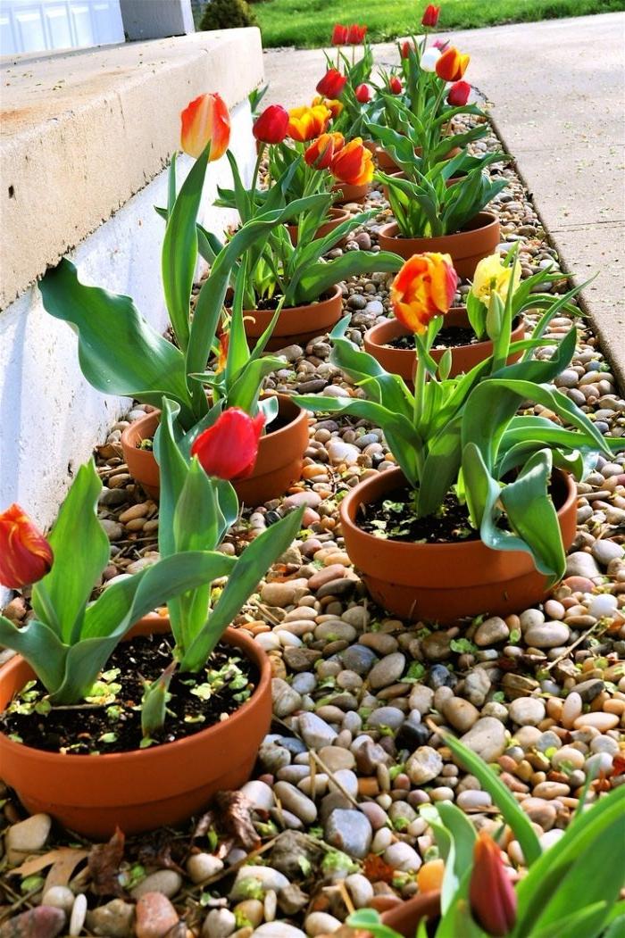 pots de fleurs deco diy avec des pots de terre avec tulipes plantés dans parterre de galets