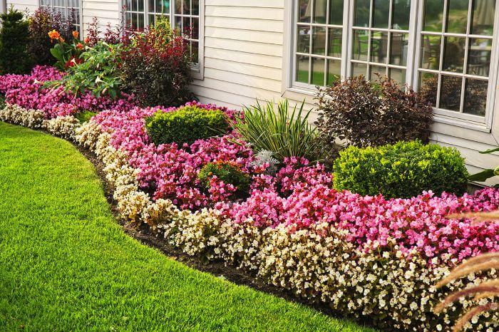 parterre de fleurs avec des fleurs jaunes en bordure d une maison à coté d uen pelouse gazon, idee amenagement bordure de fleurs