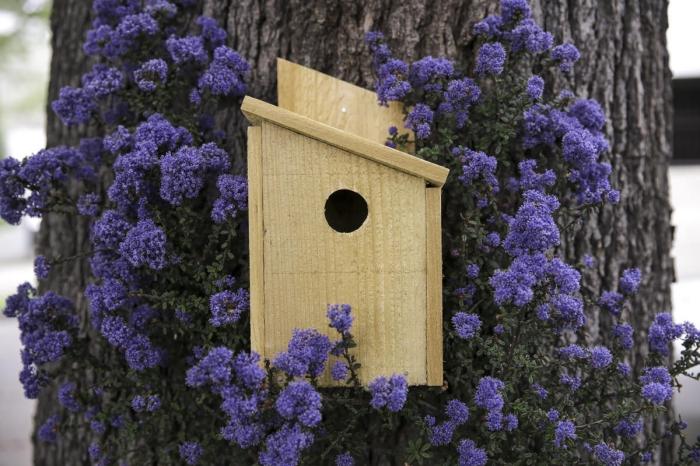 simple modèle de cabane oiseaux fabriqué avec planches de bois non traité, DIY maison pour petite oiseau sur arbre