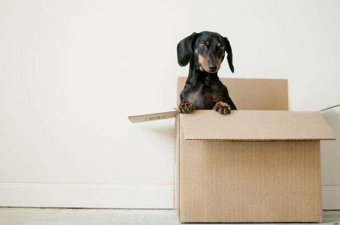 Boîte en carton avec chien dedans, comment faire de la place chez soi, les meilleures astuces pour réussir