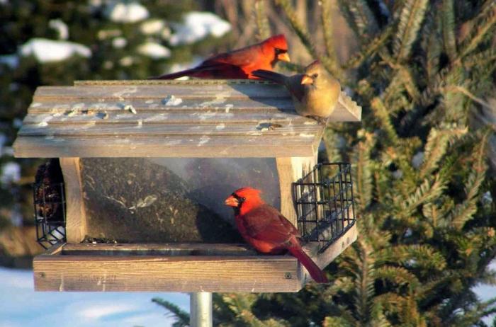 modèle de mangeoire oiseaux sur pied facile à réaliser avec planches de bois recyclés, diy mangeoire en bois