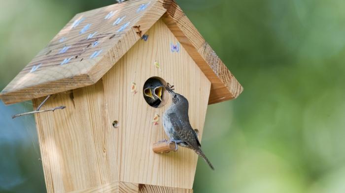 mini cabane pour oiseaux, construction de mangeoire pour petits oiseaux avec planches de bois en forme de maison