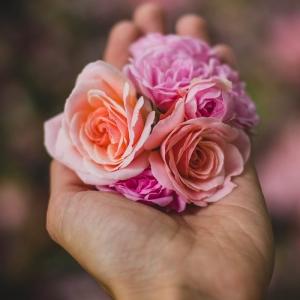 Offrir une rose éternelle en geste d'amour inconditionnel - tout savoir sur cette magnifique idée de cadeau pour femme