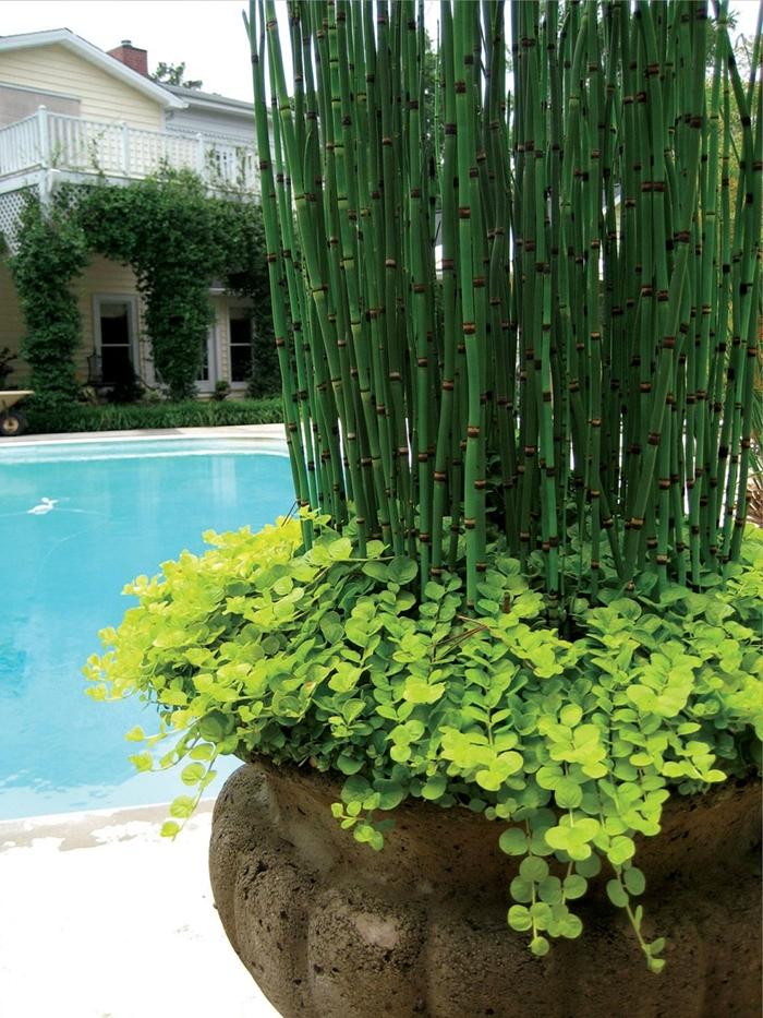 brise vue bambou design extérieur aménagement piscine plantes grimpantes façade maison terrasse bois blanc gros pot bambou