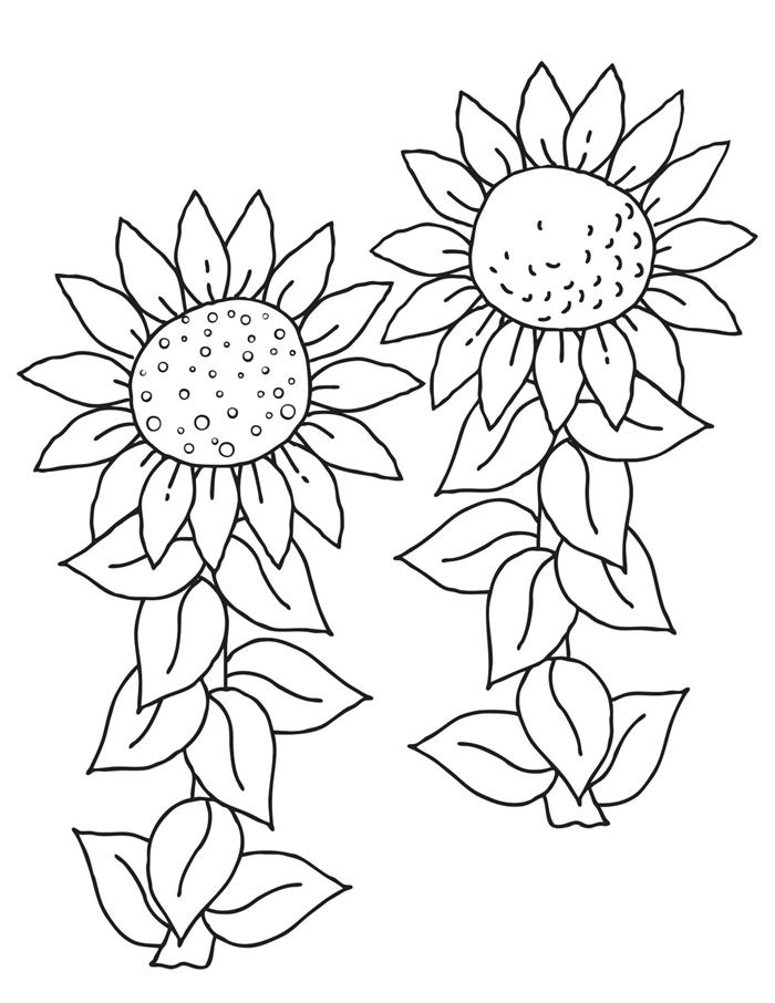 coloriage été maternelle art dessin blanc et noir fleur tournesol feuilles activité maternelle image nature vacances champs