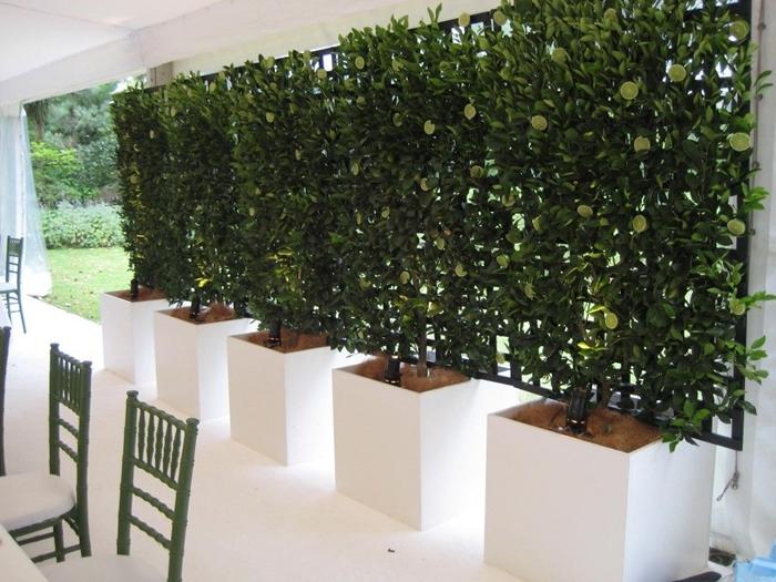 design extérieur aménagement cour arrière terrasse blanche chaises vertes mur brise vue grillage plantes grimpantes gros pots blancs