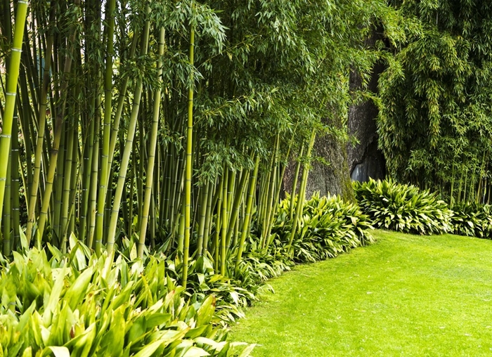 haie de jardin bambou clôture design extérieur jardinage pelouse plantes vertes arbustes brise vue végétal conseils plantes