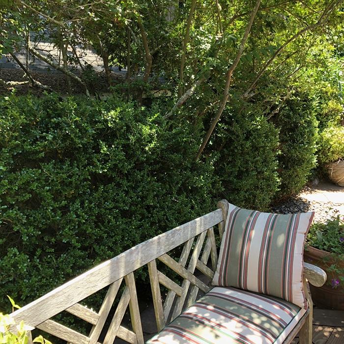 haie végétale brise vue banquette bois aménagement cour arrière avec mur végétal cache vis à vis arbustes plantes extérieur