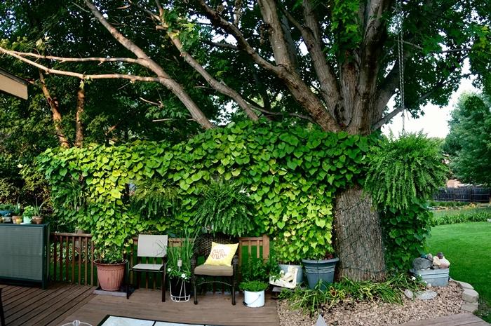 jardinage conseils intimité jardin mur végétal plantes vertes gros pots de fleurs chaise rotin déco extérieure haie brise vue