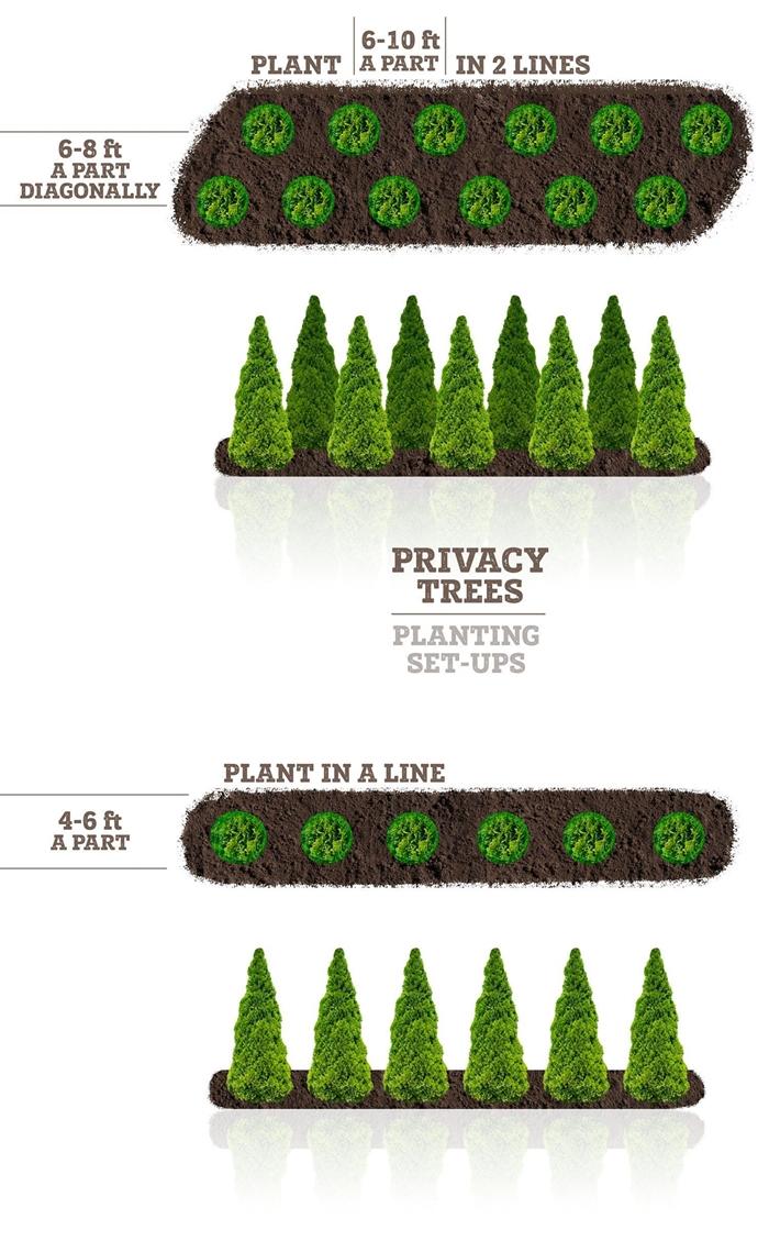 plante brise vue plan design extérieur jardinage arbres pour brise vue jardin végétal hauteur dimensions jardin arbres planter