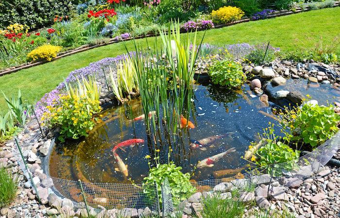 amenagement bassin karpe koi exemple bassin poisson exterieur avec des végétaux variés tout autour