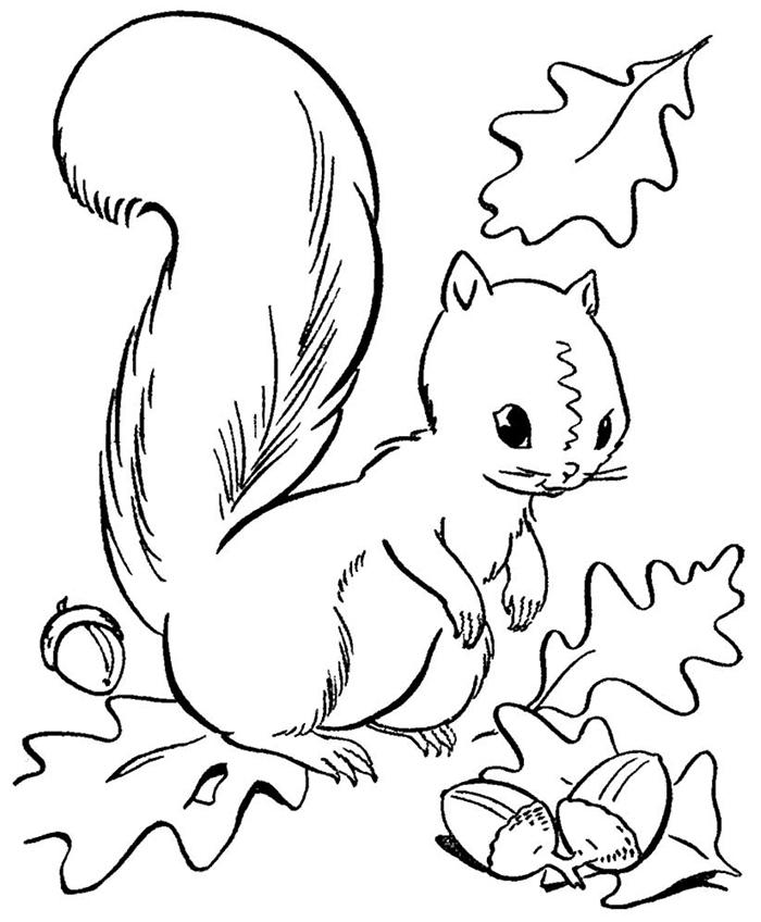 animal de forêt nature automne page à colorier blanc et noir pour enfants dessin écureuil glands et feuilles coloriage 3 ans