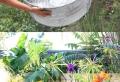 Aménagement de petit bassin de jardin – les points clés pour inviter le monde aquatique chez soi