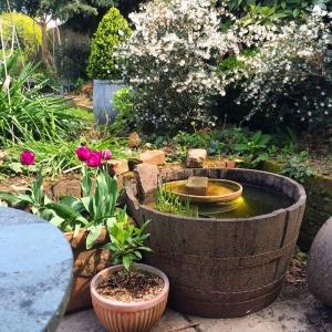 Aménagement de petit bassin de jardin - les points clés pour inviter le monde aquatique chez soi