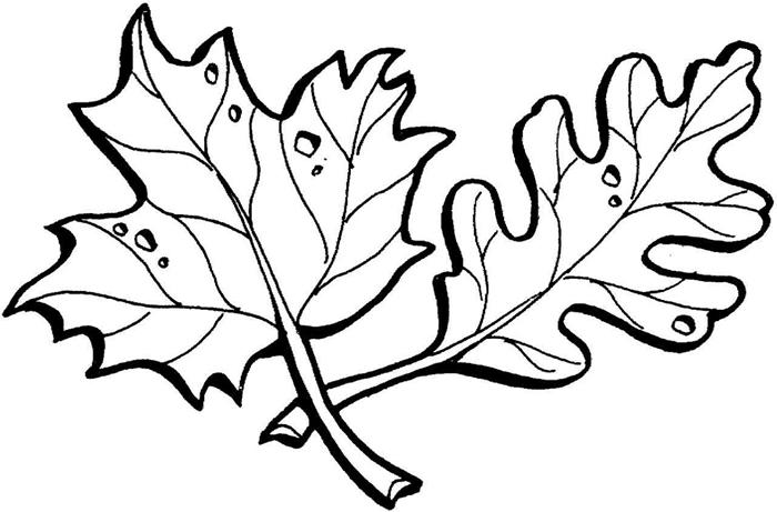 dessin grosse feuilles lignes détails page à imprimer et colorer coloriage feuille d automne art thérapie pour grands et petits