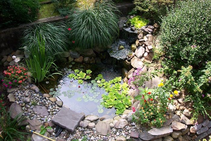 faune aquatique dans un petit bassin de jardin enterré et enturné de galets et pierres avec cascade de bassin fait maison