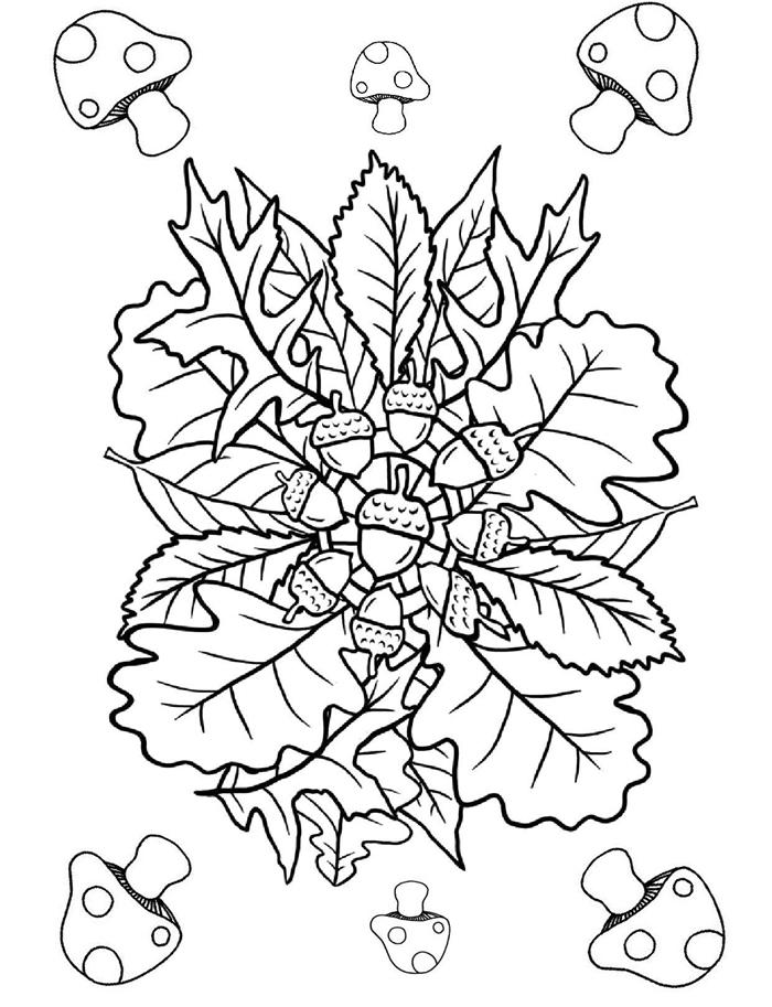 feuilles séchées nature dessin simple à colorer pour enfants et adultes page coloriage champignon forêt glands nature