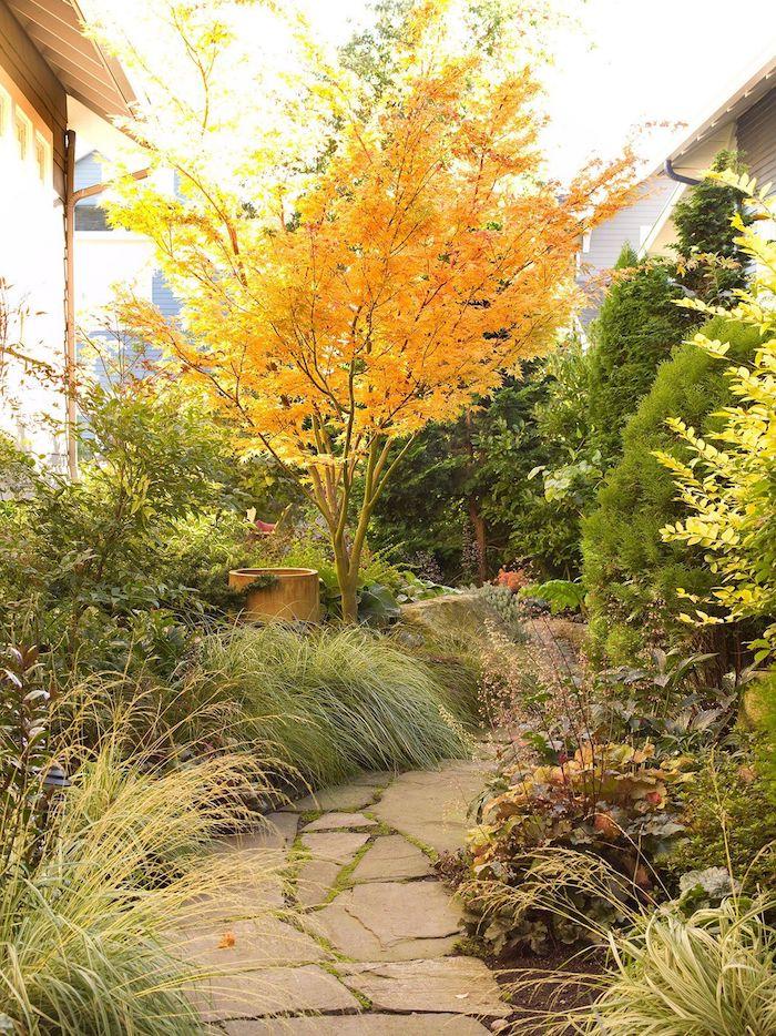 amenagement cour exterieur alle de gravier entrouree des plantes differentes jaune et vert