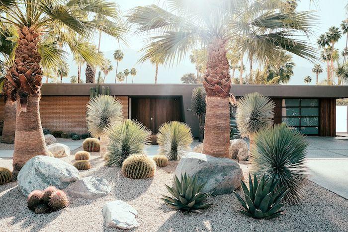 amenagement exterieur maison individuelle en style tropique des plantes succulents des cactus des palmiers