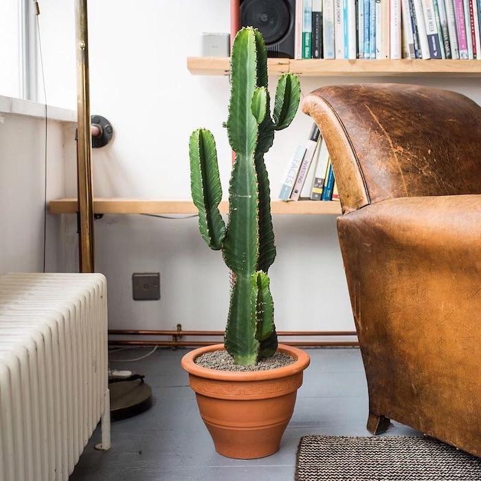 cactus en guise de bout de canapé pot de plante grande plante salon exotique originale