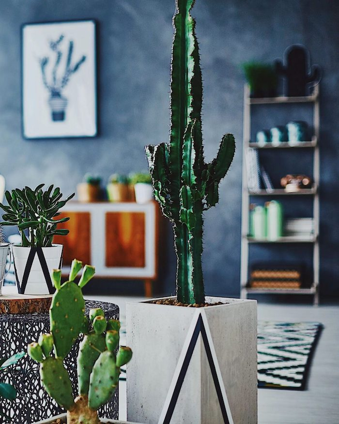 cactus en pot de beton plante appartement multitude de cactus en pot dans un salon aux murs bleu marine