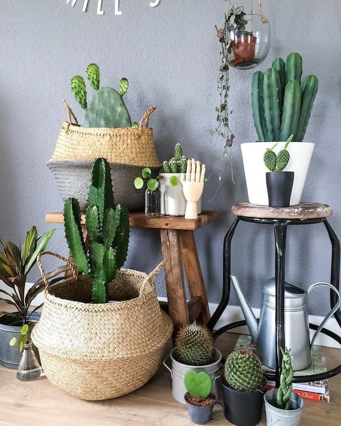 cactus osier panier et autres petits cactus en pot tabouret de bois mur gris parquet bois clair