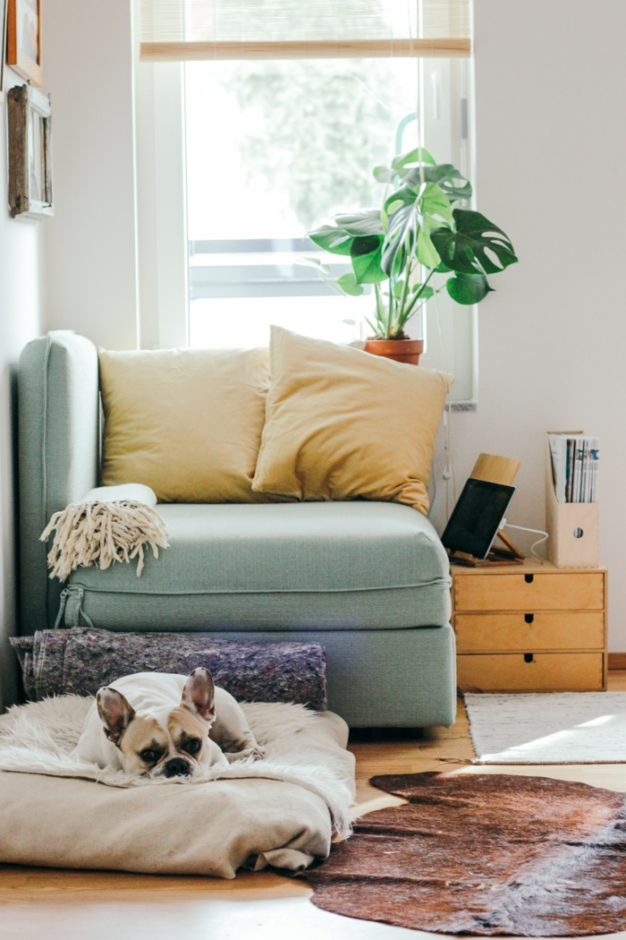 chien endormi dans le confort de la salle bien aménagée plante verte fauteuil de lecture