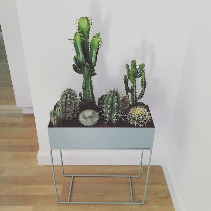 coin de la piece avec jardinière sur pieds avec multitute de cactus plantées à l intérieur plante appartement