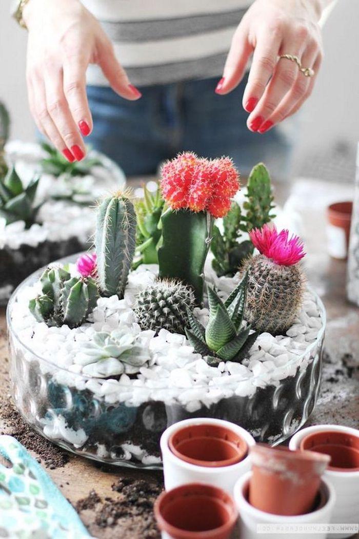 deco terrarium diy de cactus plantes succulentes galets blancs terreau plante d intérieur exotique