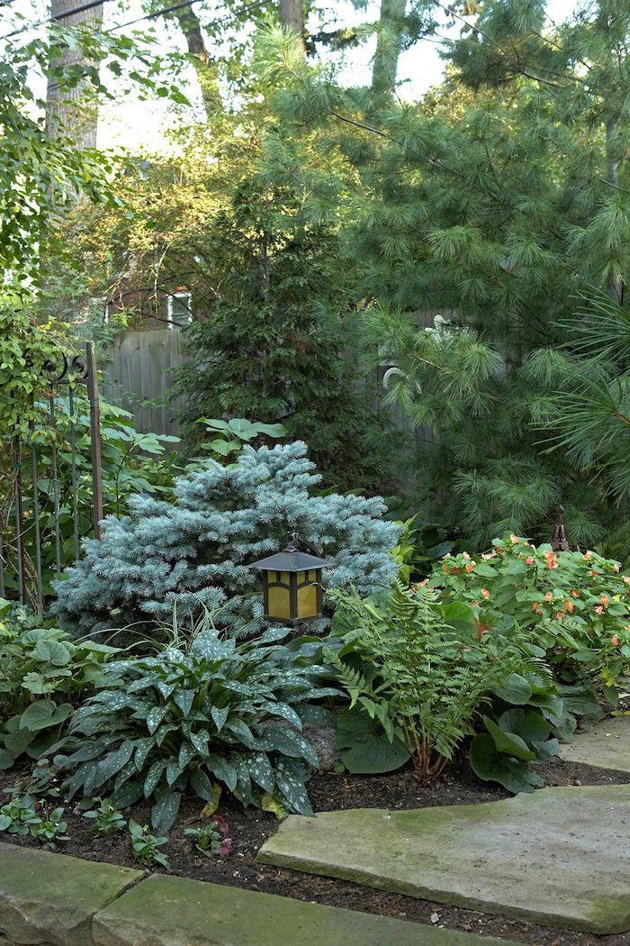 exterieur maison abondance des plantes vertes y compris des pins et des arbustes