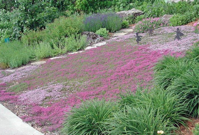 parterre de fleurs devant maison aménager sans pelouse thyme rampant