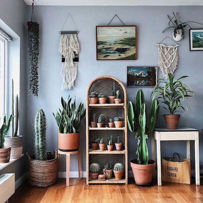 plante d intérieur exotique pots de cactus geants et petits cactus sur étagère de bois tissage mural mur gris deco jungle urbain